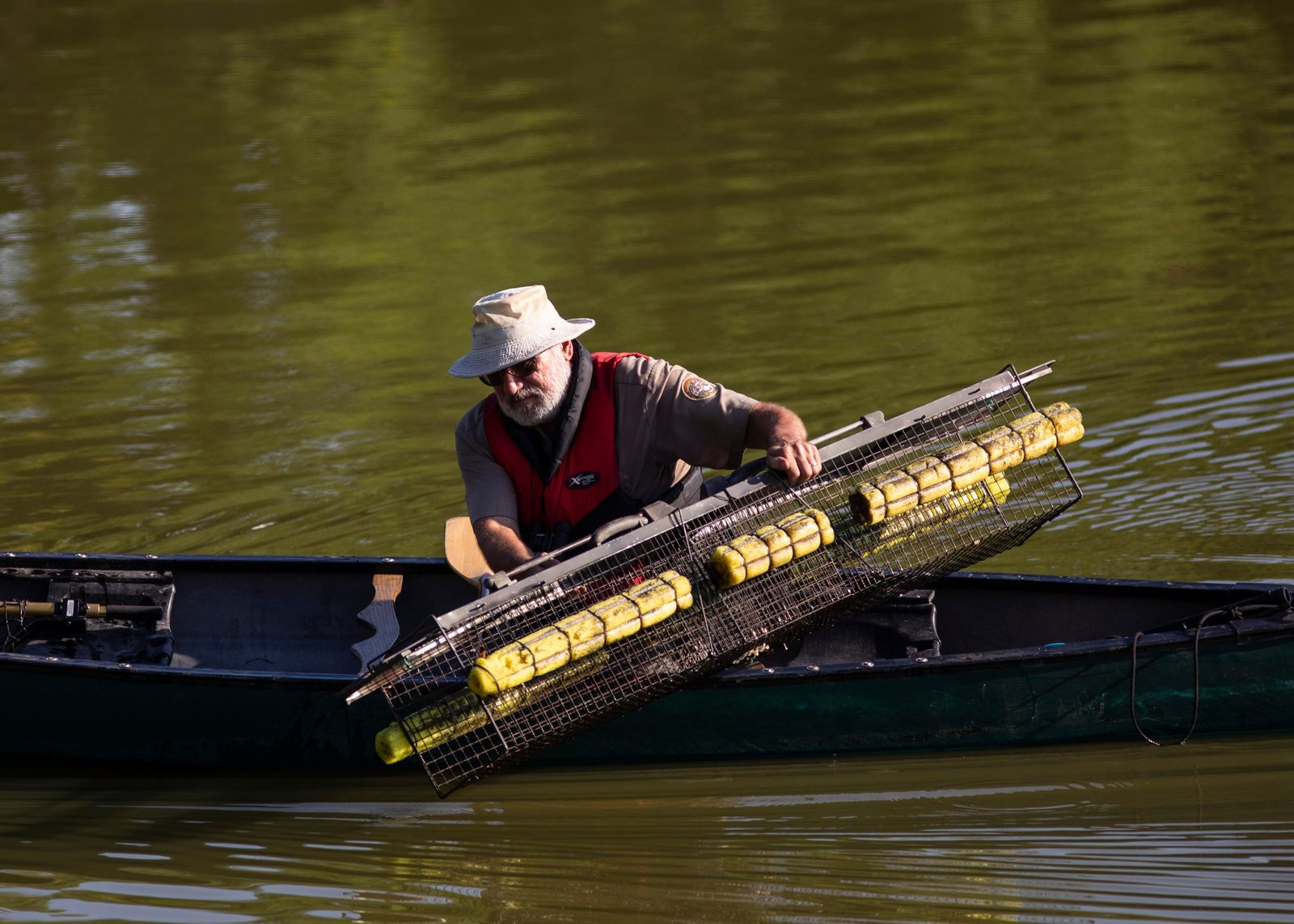"""Alligator Bob,"" an animal expert with the Chicago Herpetological Society, sets alligator traps in Humboldt Park Lagoon, Wednesday, July 10, 2019. (Ashlee Rezin/Chicago Sun-Times via AP)"
