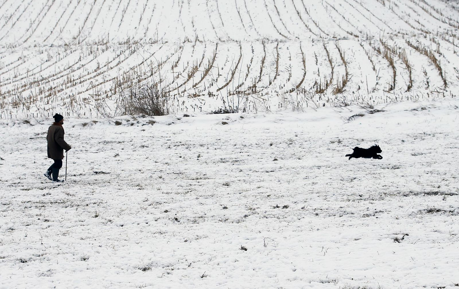 A shepherd dog runs in front of a shepherd leading a herd of sheep over snow-covered meadows near the village Beska, 30 kilometres north of Belgrade, Serbia, Friday, Jan. 11, 2019. Heavy snowfall in the Balkans has closed down schools, left some remote villages cut off and disrupted traffic and power supplies in many areas in the region. (AP Photo/Darko Vojinovic)