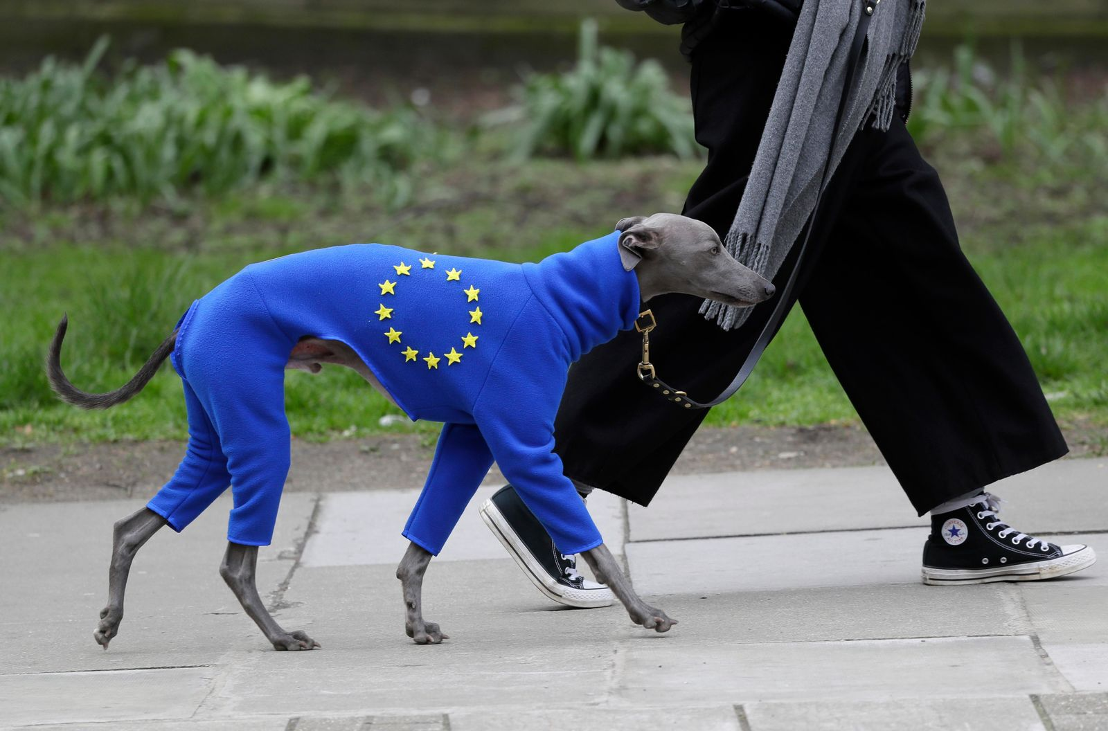 A demonstrator leads a dog wearing a suit in the EU colors during a Peoples Vote anti-Brexit march in London, Saturday, March 23, 2019.{ } (AP Photo/Kirsty Wigglesworth)