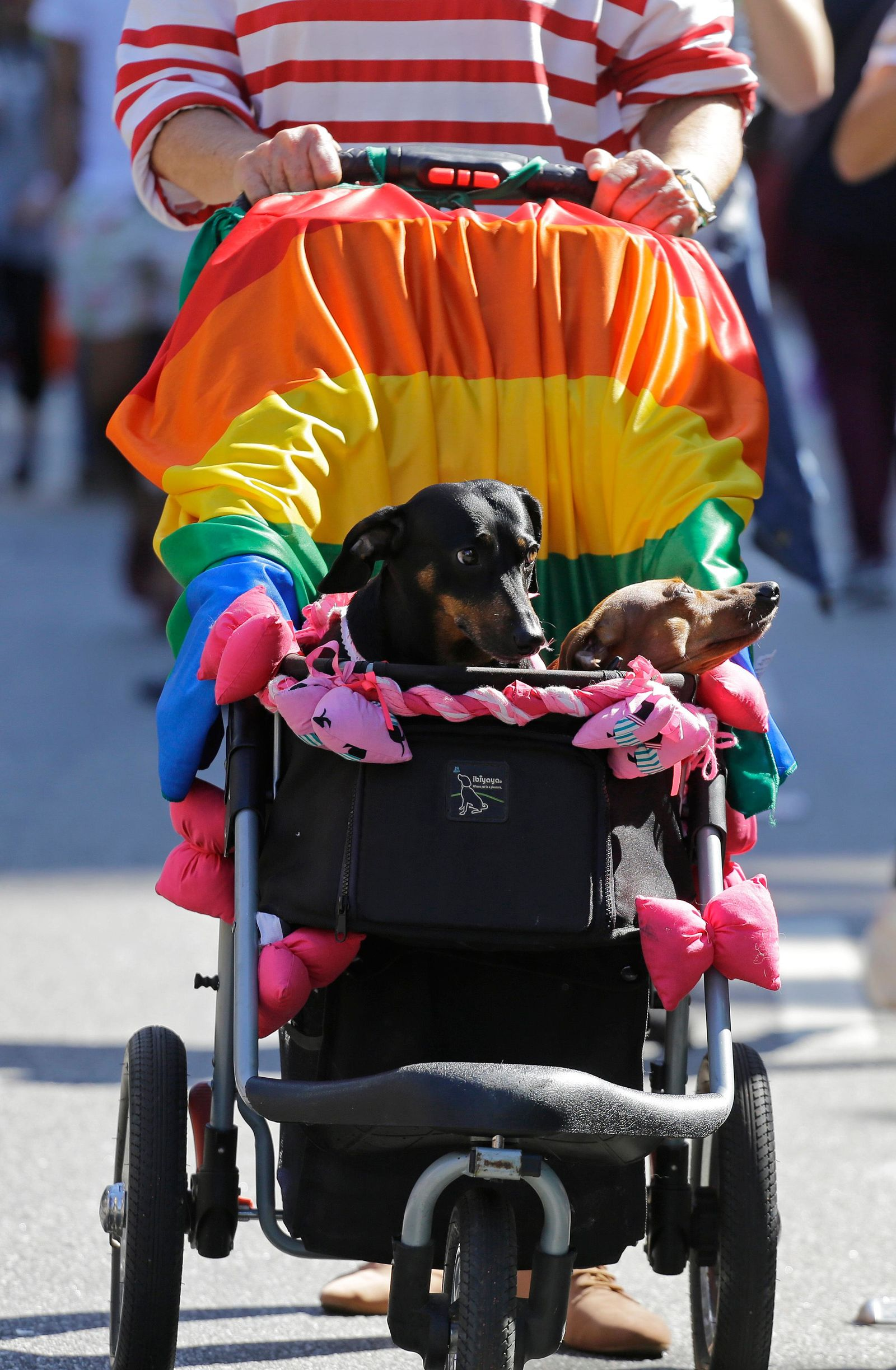 Dogs ride in a baby carriage decorated with a rainbow flag during the annual gay pride parade along Paulista avenue in Sao Paulo, Brazil, Sunday, June 23, 2019. (AP Photo/Nelson Antoine)