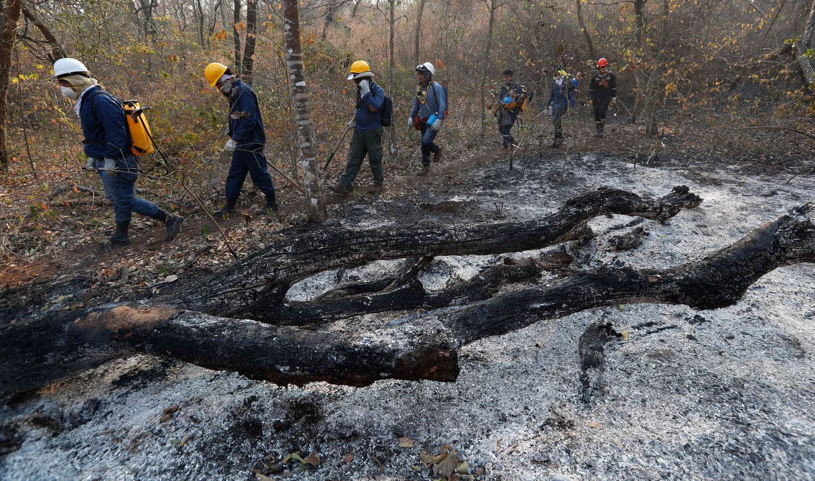 Volunteers walk past an area scorched by fires in the Chiquitania forest on the outskirts of Robore, Bolivia, Thursday, Aug. 29, 2019. While some of the fires are burning in Bolivia's share of the Amazon, the largest blazes were in the Chiquitania region of southeastern Bolivia. It's zone of dry forest, farmland and open prairies that has seen an expansion of farming and ranching in recent years.  (AP Photo/Juan Karita)