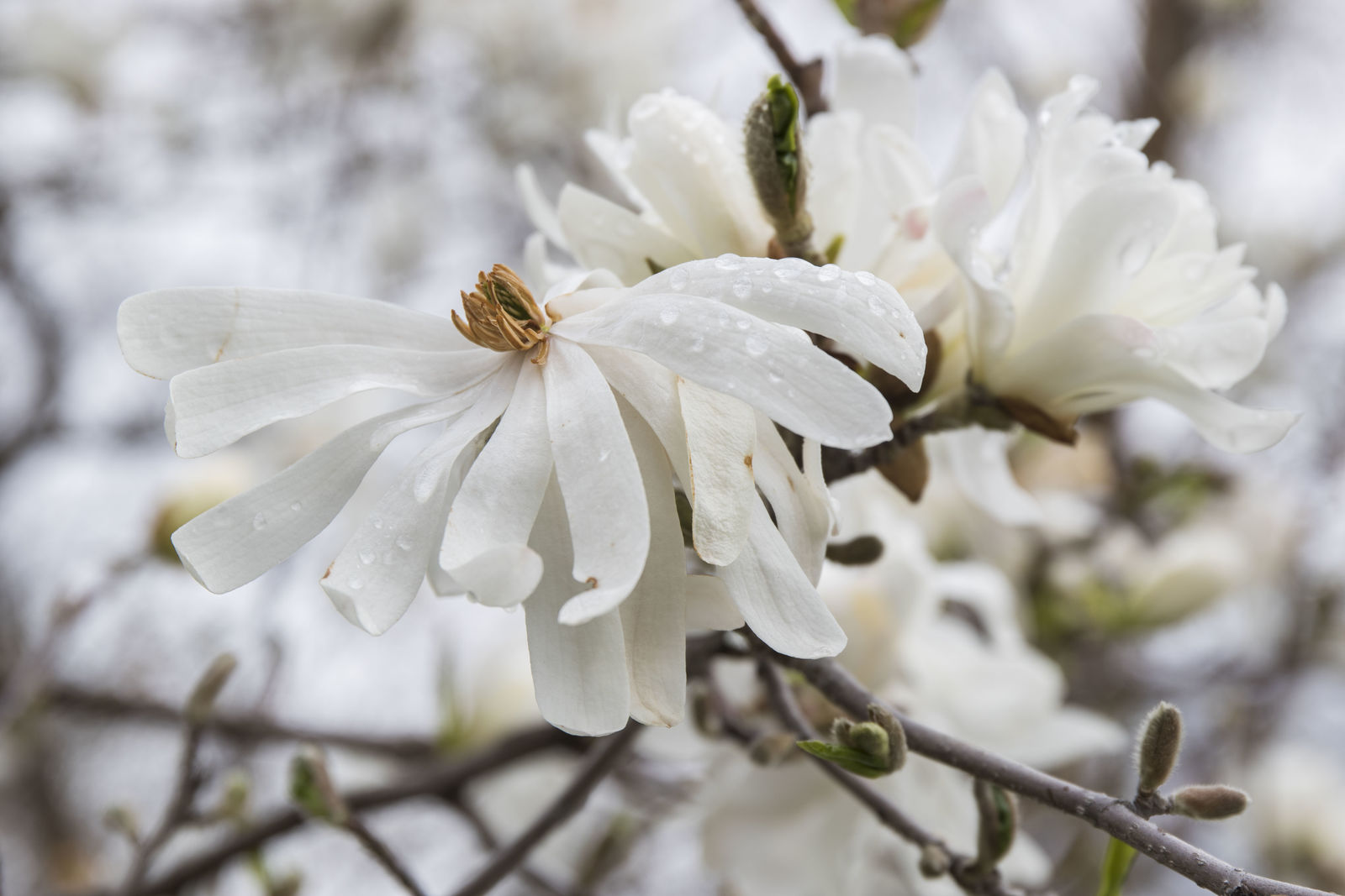 The spring bloom has begun at the Idaho Botanical Gardens. Early season flowers are in full swing and many more are ready to blossom. (Photos by Axel Quartarone){ }