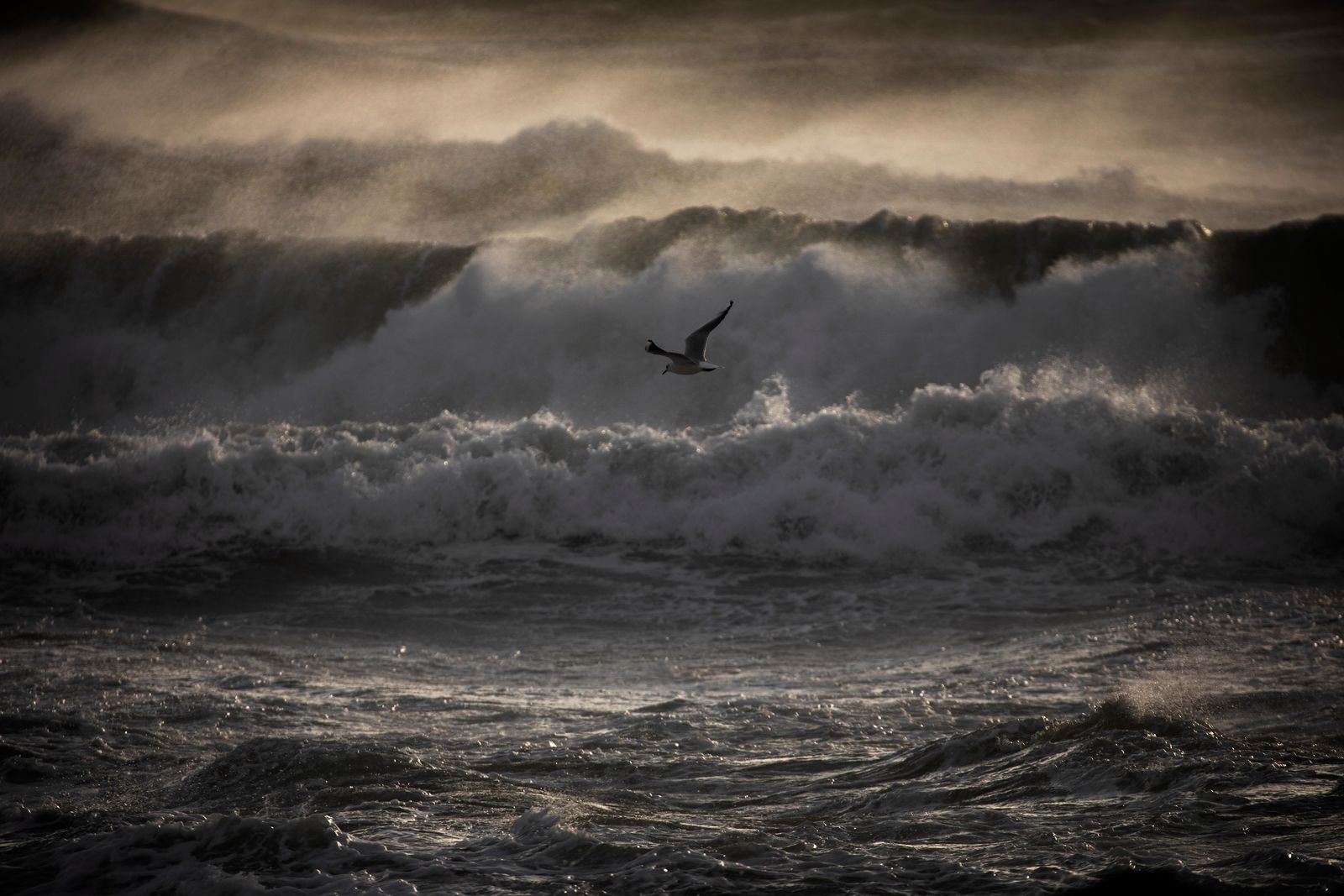 A gull overflies the Mediterranean sea during strong winds in Barcelona, Spain, Monday, Jan. 20, 2020 (AP Photo/Emilio Morenatti)