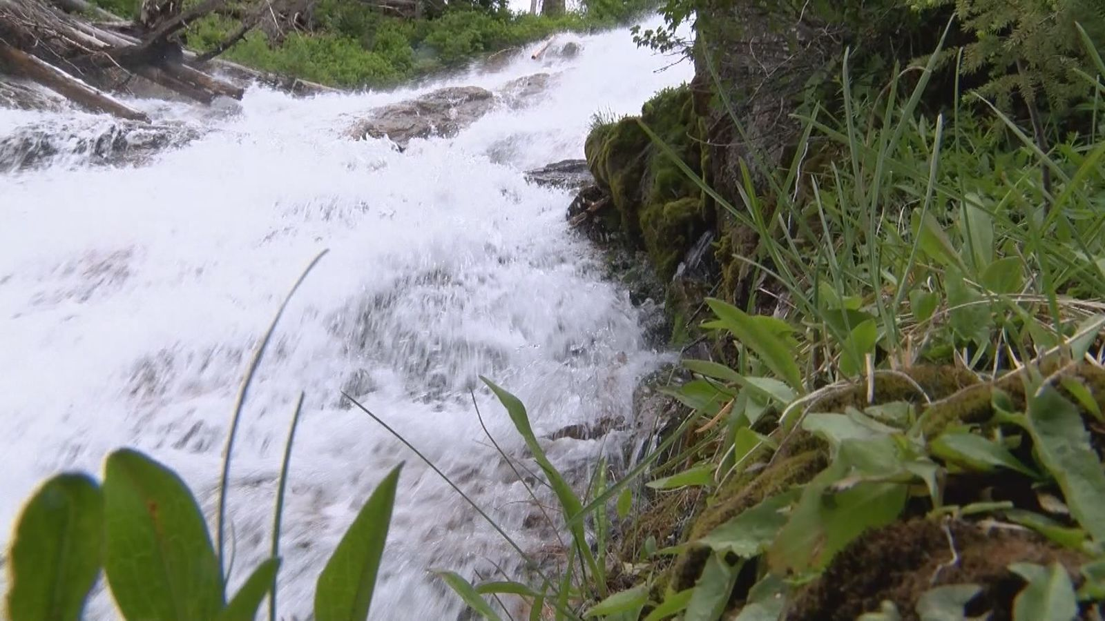 The water provides abundant plant life.