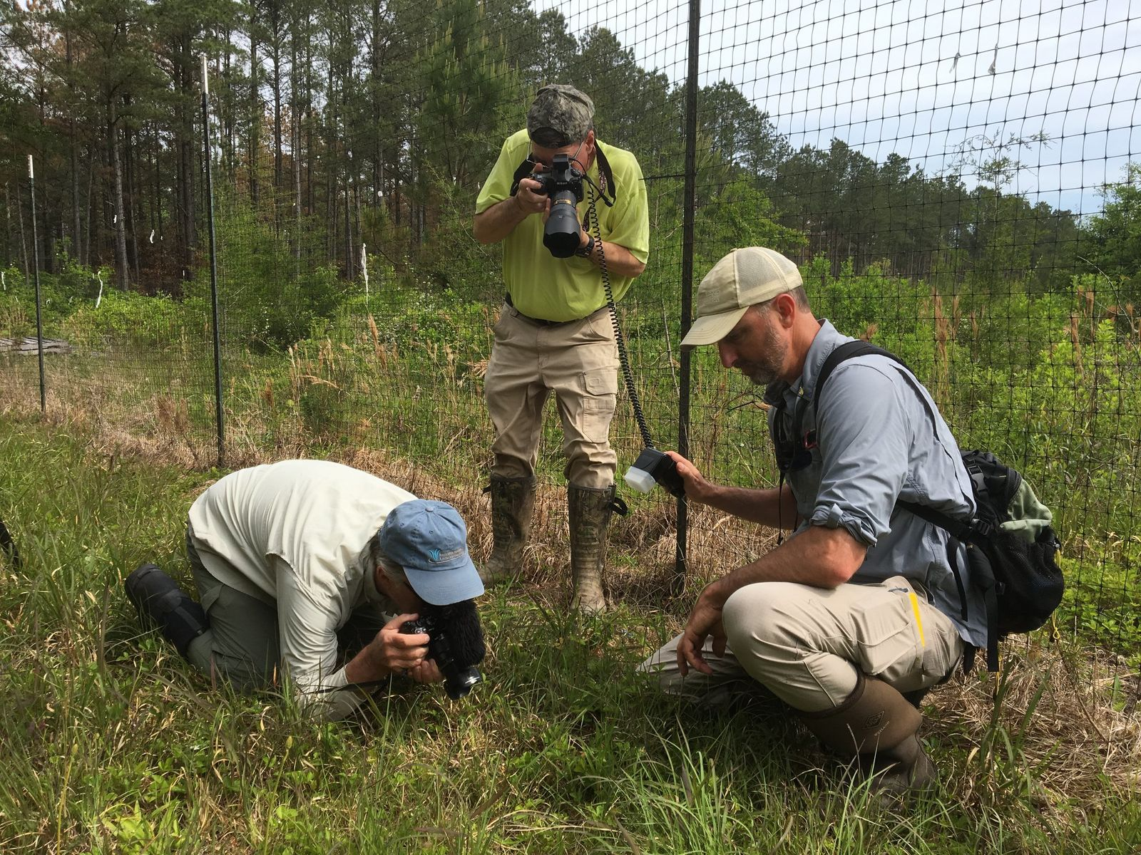 Botanists taking pictures of the new species. (Courtesy of Maryland Department of Natural Resources)