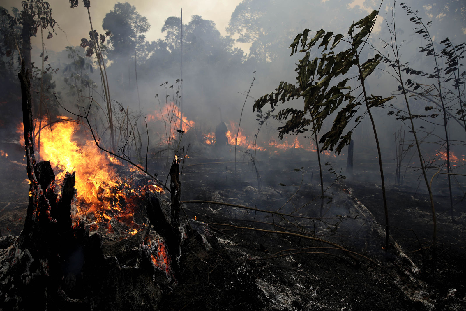 A fire burns trees and brush along the road to Jacunda National Forest, near the city of Porto Velho in the Vila Nova Samuel region which is part of Brazil's Amazon, Monday, Aug. 26, 2019. (AP Photo/Eraldo Peres)