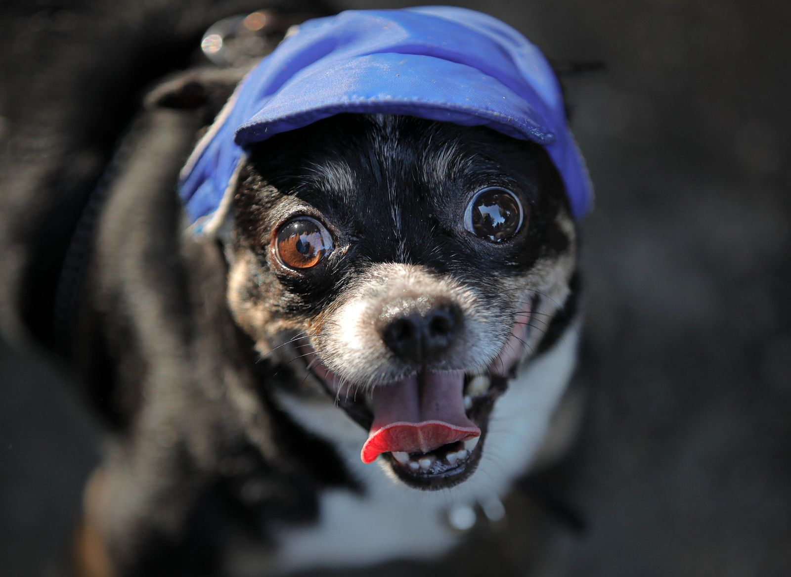 Miky the dog, wearing a hat for sun protection, waits to be sprinkled with water by its owner while on a walk in a park as temperatures reached 34 degrees Celsius (93.2 Fahrenheit) in Bucharest, Romania, Sunday, Aug. 11, 2019. The national weather authority issued a heat wave warning with temperatures expected to rise above 35 degrees Centigrade (95 Fahrenheit) in the shade in the coming days.(AP Photo/Vadim Ghirda)