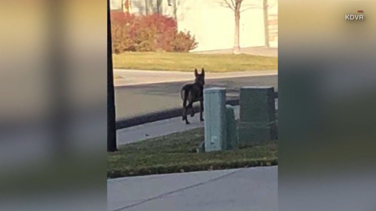 <p>A dog that was found abandoned in a Colorado neighborhood has found a new leash on life after a sheriff's deputy adopted her. (Courtesy: KDVR, CNN Newsource){&nbsp;}<br></p>