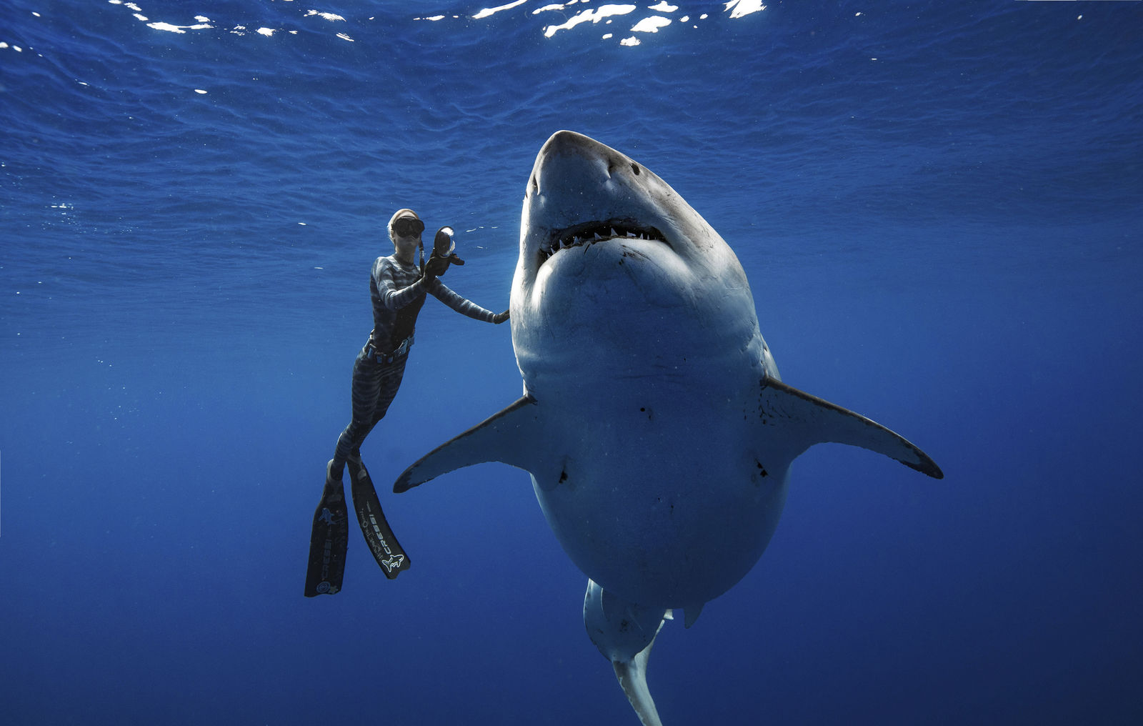 In this Jan. 15, 2019 photo provided by Juan Oliphant, Ocean Ramsey, a shark researcher and advocate, swims with a large great white shark off the shore of Oahu. (Juan Oliphant via AP)