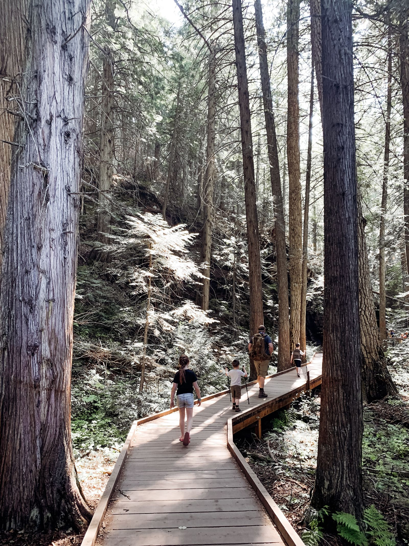 Trail of Cedars{ }(Image: Gretchen Bossio / Seattle Refined).