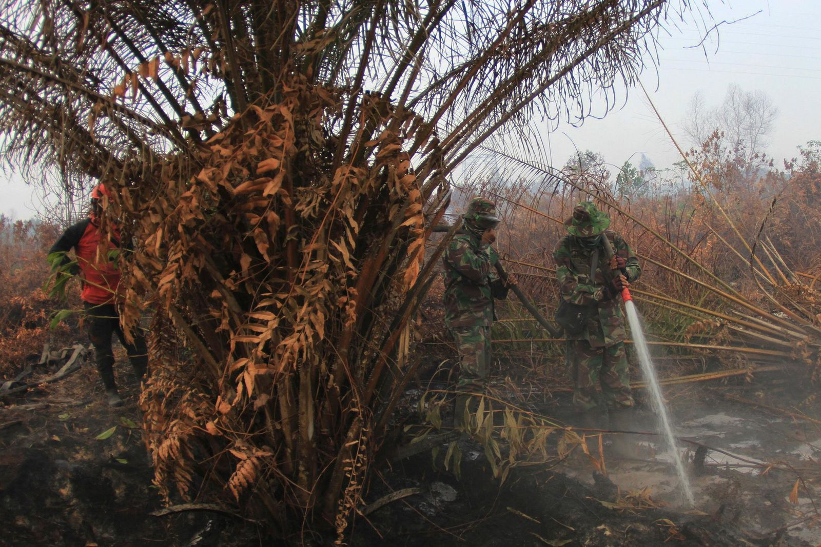 Soldiers spray water to extinguish forest fire at a peatland field in Kampar, Riau province, Indonesia, Tuesday, Sept. 17, 2019. Indonesian authorities have deployed more personnel and aircraft to battle forest fires that are spreading a thick, noxious haze around Southeast Asia. (AP Photo/Rafka Majjid)