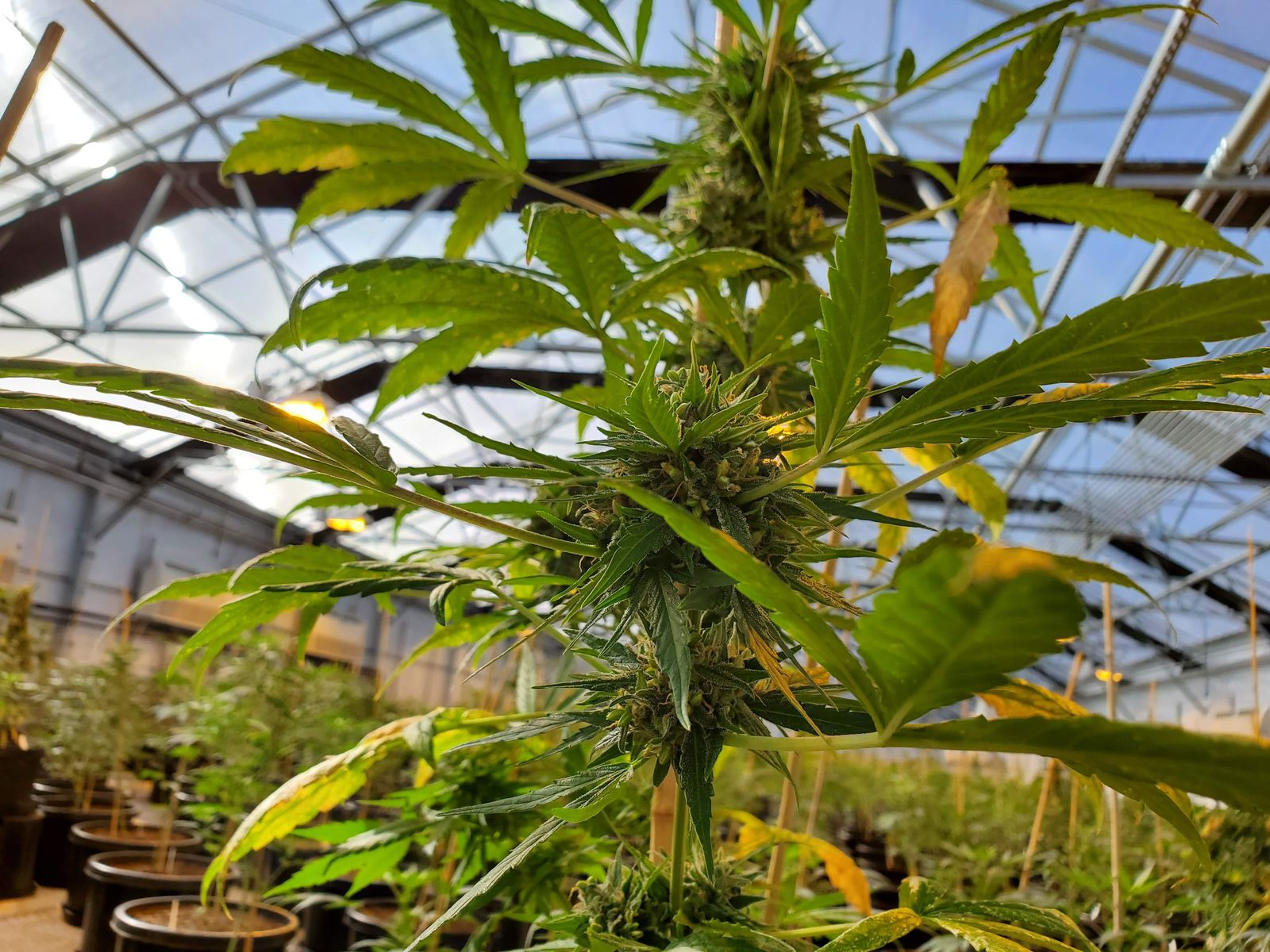 "<p>One of the brothers, Eric Crawford, says there's big money in the industry. ""I don't think there really is anything in agriculture that is worth as much as hemp is,"" Crawford said. (OSU)</p>"