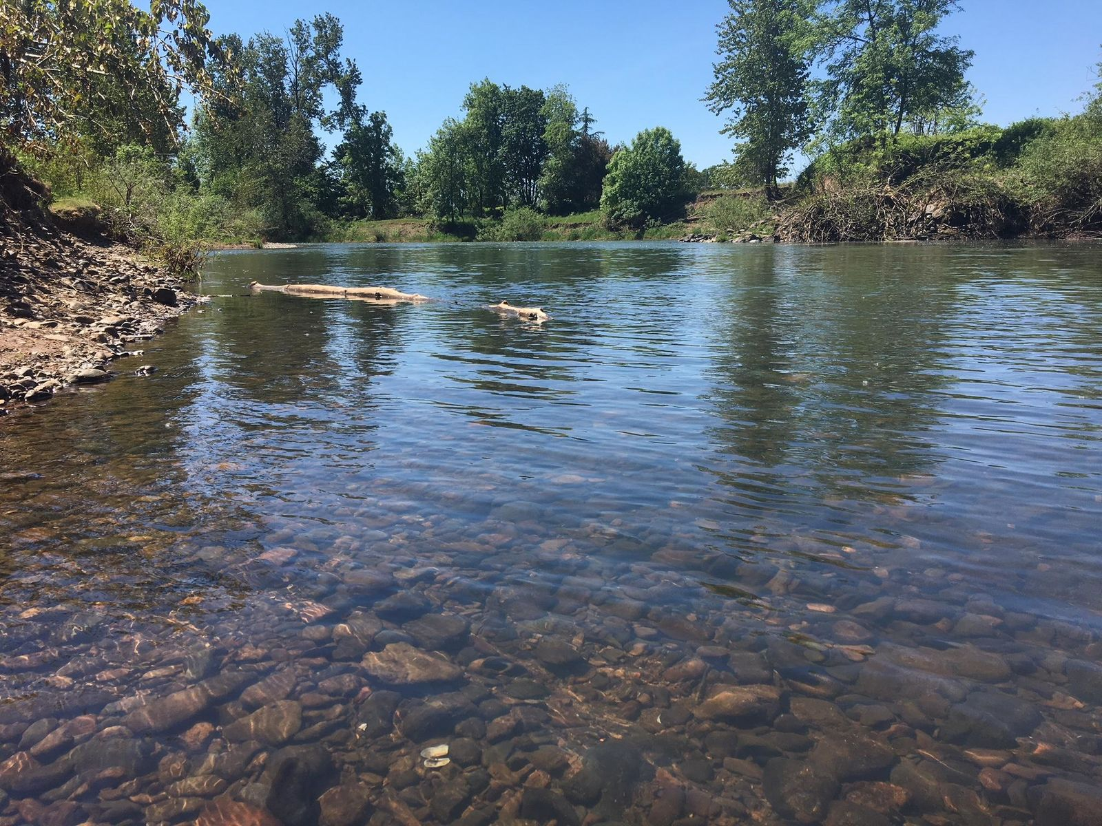 The McKenzie and Willamette rivers are still in the mid-40s temperature-wise, officials say. (SBG)