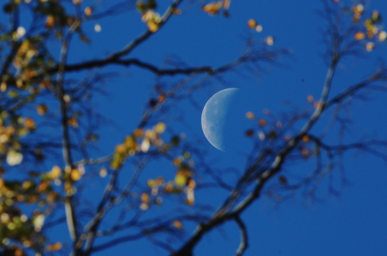 { }The moon is seen behind trees as the early morning sunlight breaks through leaves that are begining to change colour in Victoria Park on October 12, 2009 in Bath, England.{ } (Photo by Matt Cardy/Getty Images)