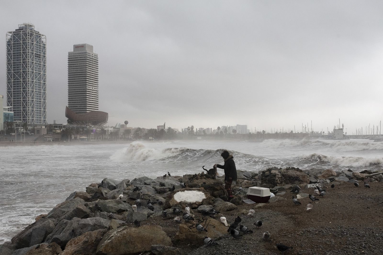 A woman pets a cat in Barcelona's beach, Spain, Wednesday, Jan. 22, 2020. Massive waves and gale-force winds smashed into seafront towns, damaging many shops and restaurants and flooding some streets. (AP Photo/Joan Mateu)