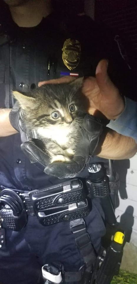 Two Rockland police officers saved kitten that was stuck in a sewer pipe. (Rockland Police Department)