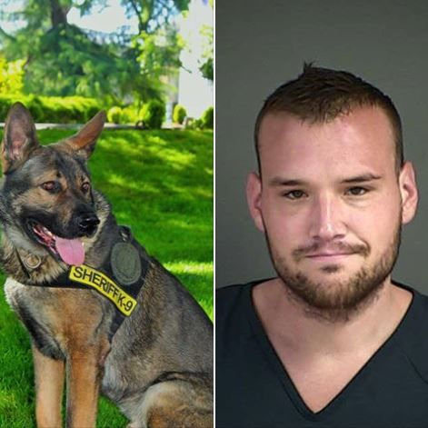 Douglas County Sheriff's K9 Grim arrest helped bring about the arrest of 30-year-old Kaleb Ray Abraham in Douglas County on June 14, 2019. (DCSO image)