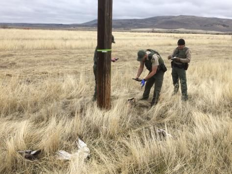 <p>California Dept. of Fish and Wildlife investigators investigating the state's largest known raptor poaching case in March 2018 in northeastern California. <br>CDFW photo</p>