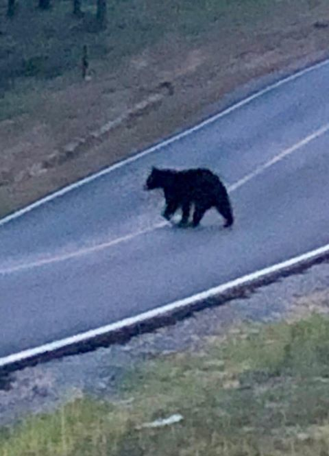 The same viewer took this photo of a bear in the same area last week.{ }