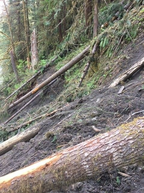 Due to landslides and broken bridges, the Fall Creek Trail #3455 is under a new emergency closure until further notice, Willamette National Forest said n June 13, 2019. (Willamette National Forest photo)