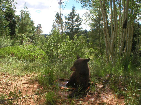 They may not have known it at the time, but some of Utah's cutest critters were taking part in National Selfie Day on Friday. (Photo courtesy Utah DNR)
