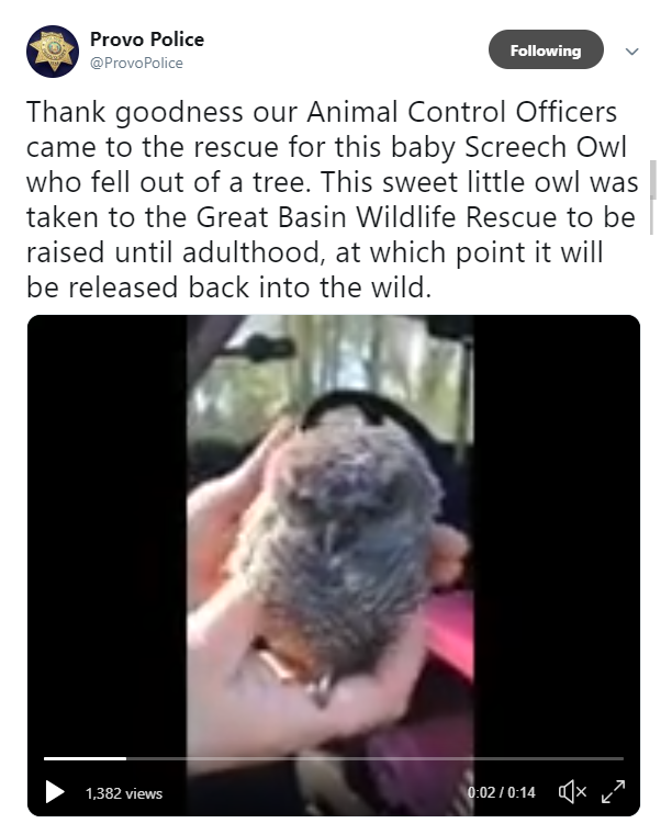 Provo officers rescue baby owl who fell from tree. (Photo: Screengrab from Provo Police Department Twitter)