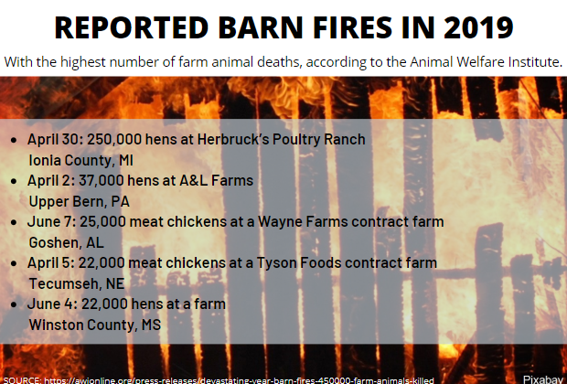 At least 469,000 farm animals have perished in potentially preventable barn fires so far this year, according to an Animal Welfare Institute (AWI) analysis of media reports. (Courtesy: mgnonline){&nbsp;}<p></p>