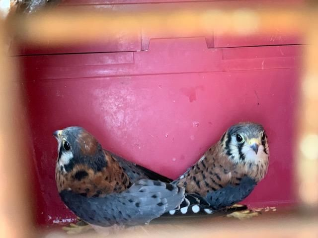 "If a nest has eggs or baby birds - ""leave it alone or face citation,"" stated the Division of Wildlife Resources on Tuesday. (Photo Courtesy of the Utah Division of Wildlife Resources)"