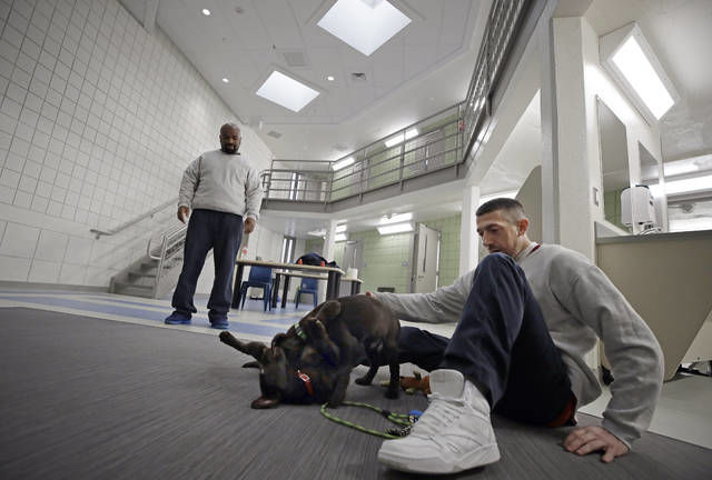 "In this Jan. 8, 2019, photo, inmates Justin Martin, right, and Jonathan Ladson, watch chocolate lab puppies play at Merrimack County Jail in Boscawen, N.H. The New Hampshire jail is the first in the state to partner prisoners with the ""Hero Pups"" program to foster and train puppies with the goal of placing them with military veterans and first responders in need of support dogs. (AP Photo/Elise Amendola)"