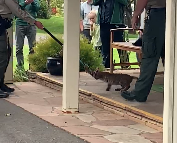 School staff discovered the wild cat and shut it in a room while authorities responded. The animal was removed from the building without incident.  (Photo: Still from video by Monica Nordgren via KVAL)