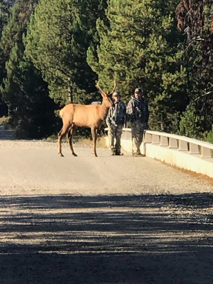 <p>A group of hunters made an unexpected friend during their hunting trip in Utah. (Photo courtesy of Trevor Chadwick){&nbsp;}</p>