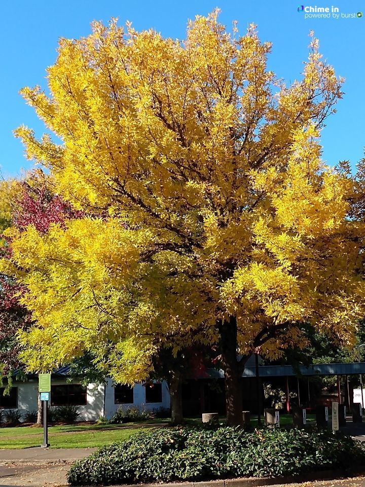 Emily Blankenship shared photos of fall in all its glory via the CHIME IN tab on our website.