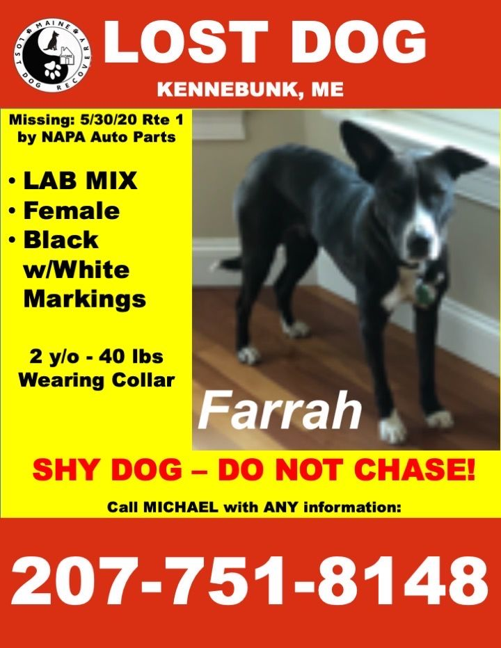 Ouellet is staying hopeful as he and his family post 800 flyers to try and find Farrah, their two-year-old rescue puppy. (Mike Ouellet){&nbsp;}<p></p>