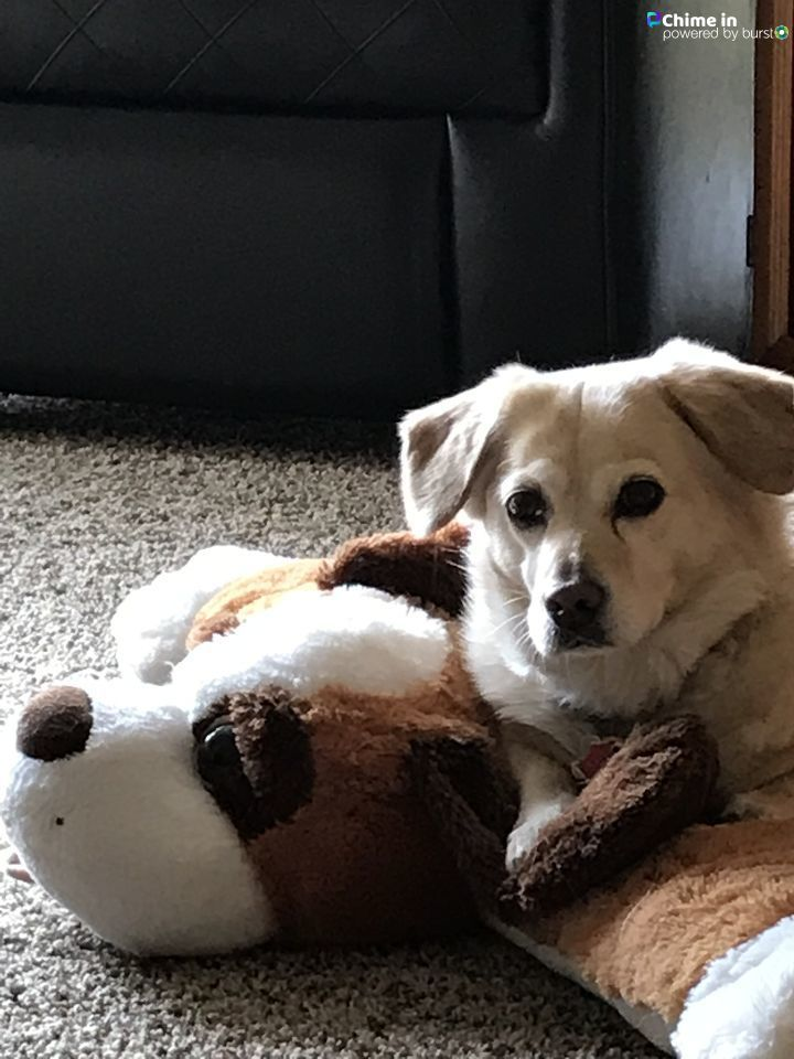 Happy National Pet Day! Viewers from around the Treasure Valley shared photos of their furry friends. Have photos you want to share? Submit them to idahonews.com/chimein for a chance to be featured on in our photo gallery! (Courtesy Photo){ }