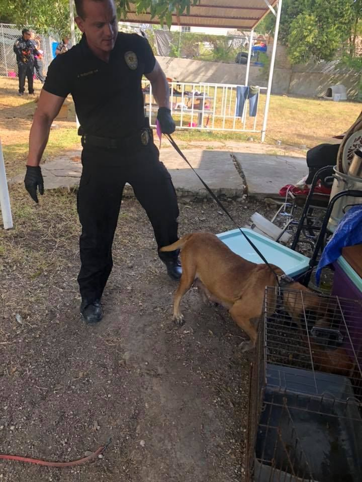 SAFFE officers assisted Animal Care Services officers in rescuing nearly 30 animals from unsafe living conditions at a house on Friday, September 13, 2019. (Photo: SAPD East SAFFE)