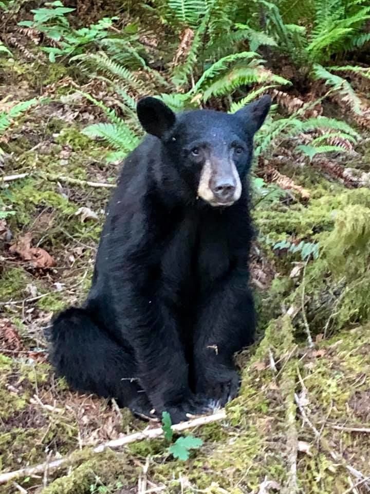 Friendly bear euthanized in Oregon after it became too friendly with people. (Washington County Sheriff's Office)