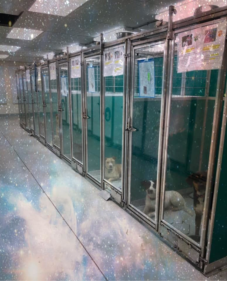 <p>Come storm our shelter...</p><p>We have great animals ready to protect you from the Area 51 aliens.</p><p>Adoption isn't that far out of this world! (Courtesy: OKC Animal Welfare)</p>