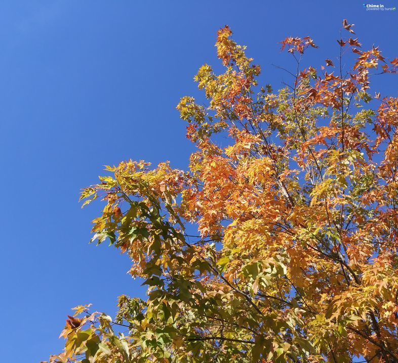 Calee Daggett shared photos of fall in Springfield via the CHIME IN tab on our website.