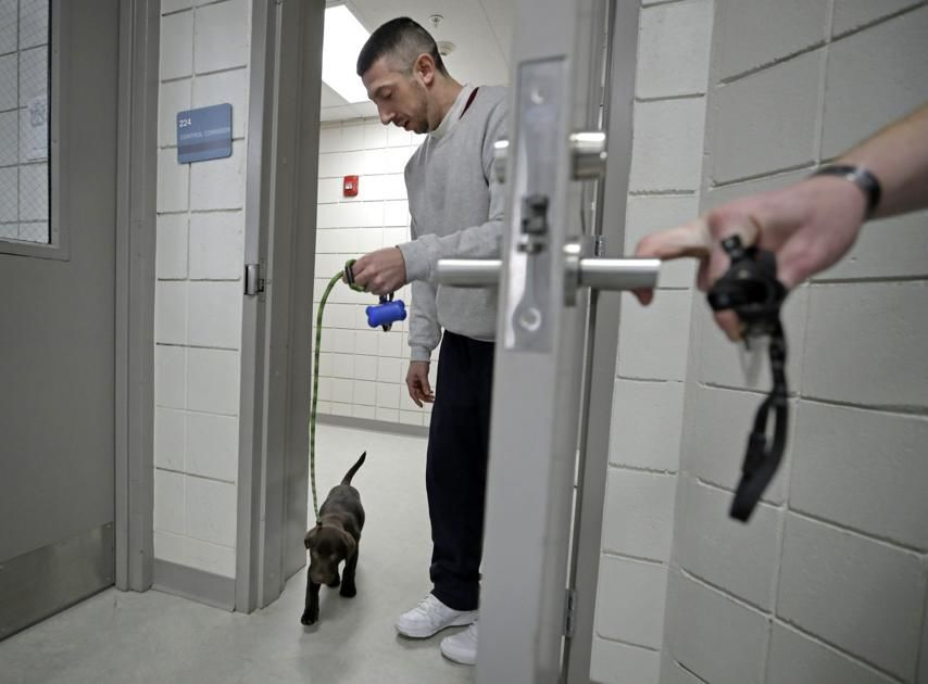 "In this Jan. 8, 2019, photo, inmate Justin Martin walks a chocolate lab puppy back into his cell area at Merrimack County Jail in Boscawen, N.H. The New Hampshire jail is the first in the state to partner prisoners with the ""Hero Pups"" program to foster and train puppies with the goal of placing them with military veterans and first responders in need of support dogs. (AP Photo/Elise Amendola)"