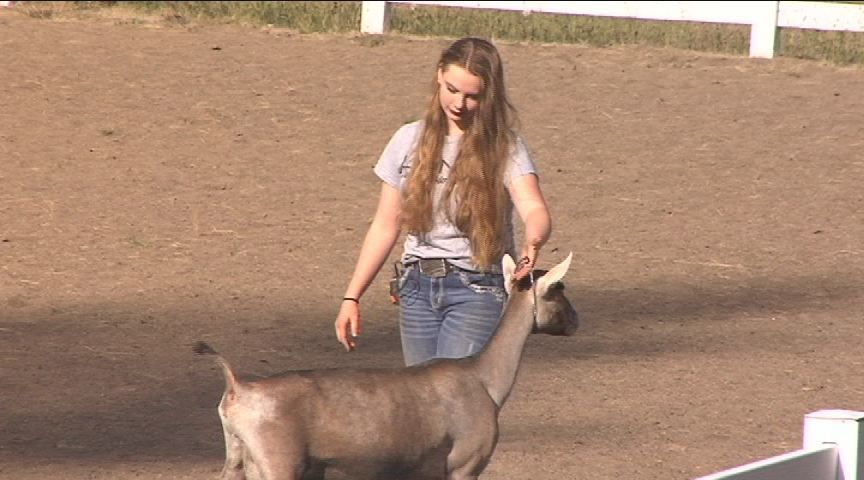 Local 4-H club gives kids a chance to build life skills while finding future passions