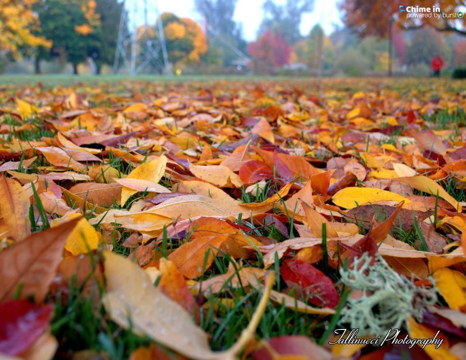 Giancarlo Schmoll shared photos of fall scenes at Alton Baker Park in Eugene, Oregon, via the CHIME IN tab on our website.