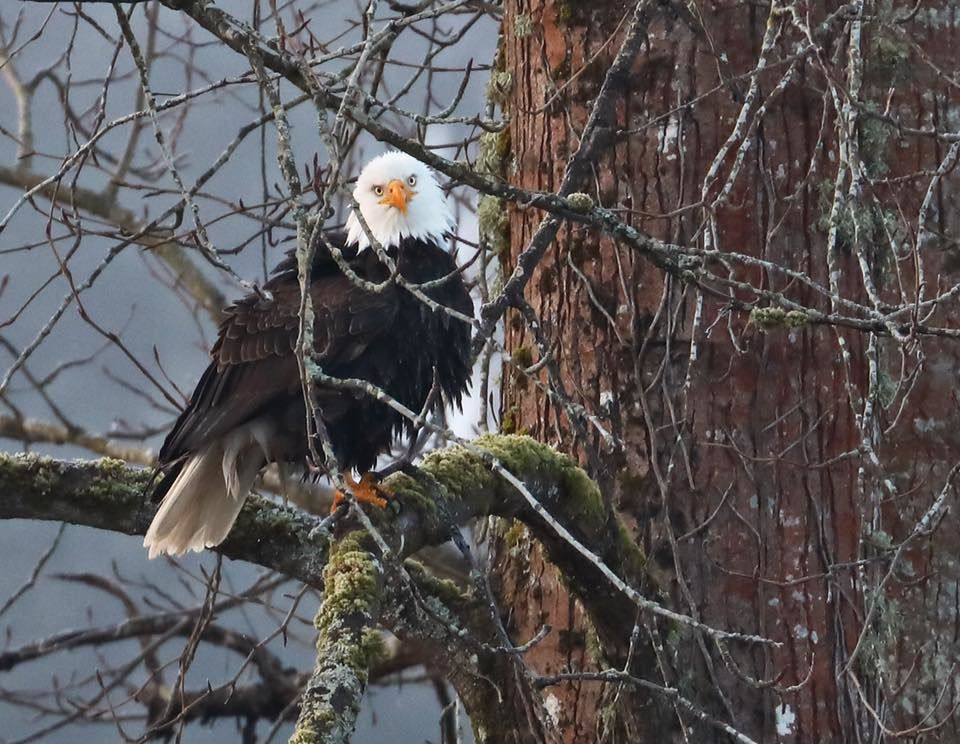 Photo: Dave Peterson, Kenmore WA. Peterson lives right off the Sammamish River and always has his high-speed camera at the ready!