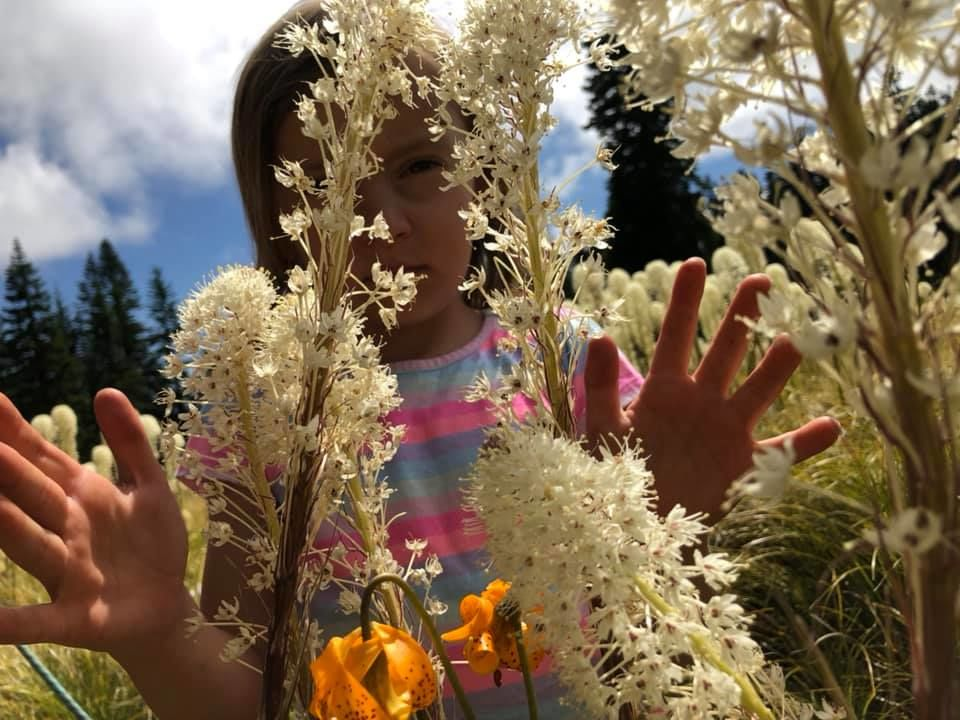 The beargrass is blooming on Sourgrass Mountain above Oakridge, Oregon, along the Alpine Trail. The white puffy blooms happen in 5 to 7 year cycles. The orange flower interspersed with the beargrass is Tiger lily. IF YOU GO: Share your wildflower photos via the CHIME IN tab on our website.