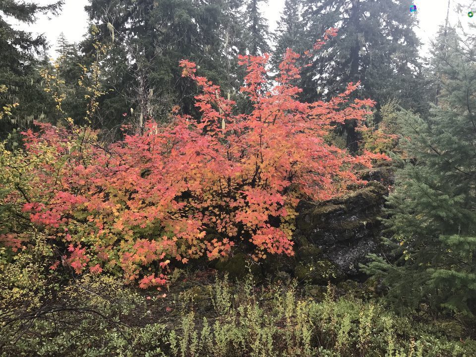 Dan Lockwood shared photos of fall color at Fish Lake via the CHIME IN tab on our website.