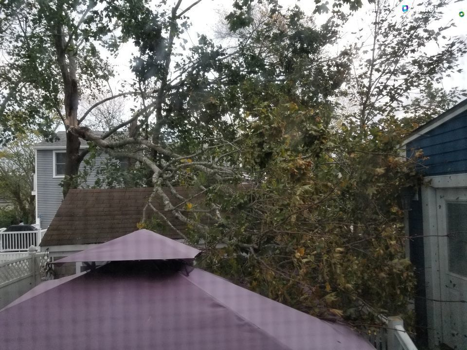 <p>A tree limb fell on a property in Fairhaven, Oct. 17, 2019. (Rene/Chime in)</p>