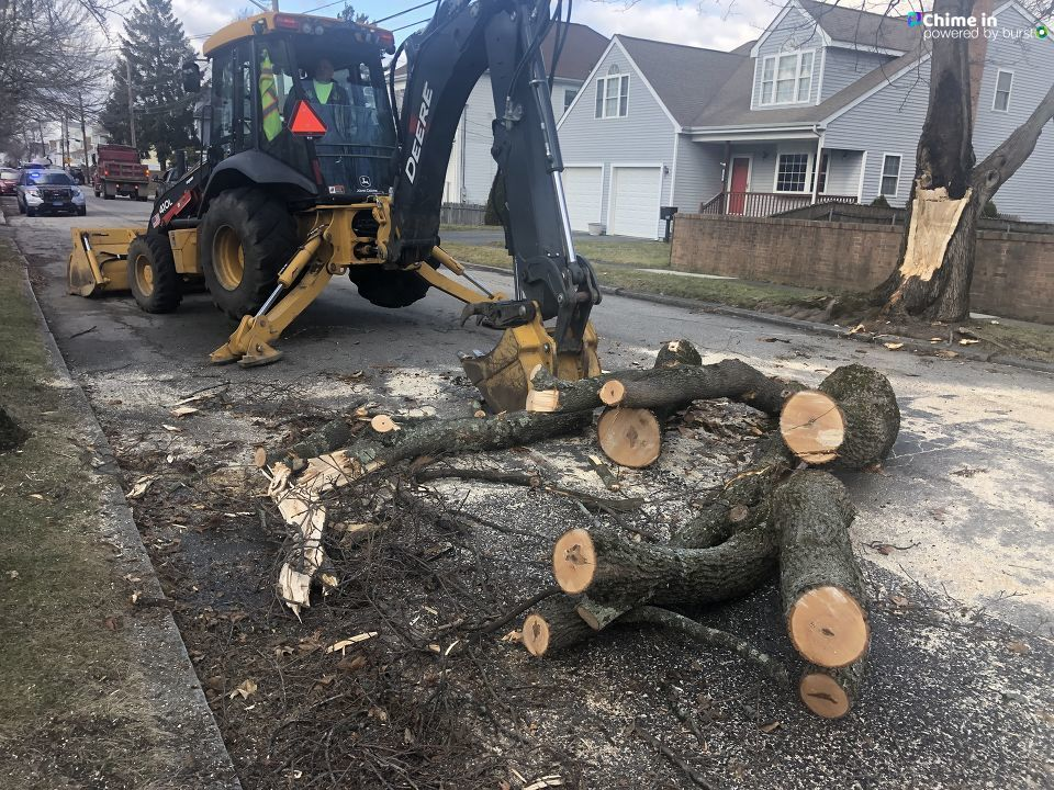 East Providence tree cleanup (Jessica Botelho via Chime In)