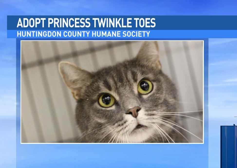Princess twinkle toes is up for adoption at the Huntingdon Humane Society.