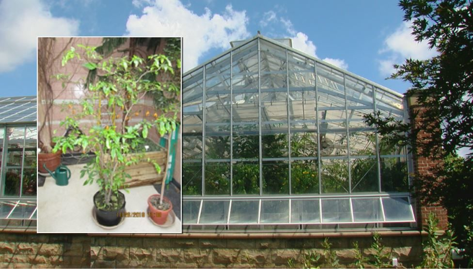 A psychedelic plant from Africa has bloomed into a controversy involving Miami University officials, according to police and the DEA. (DEA/WKRC)<br>