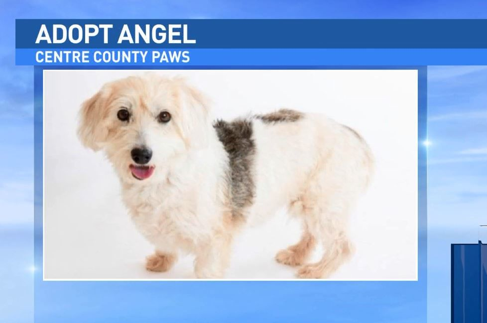 Angel is being cared for by Centre County Paws and is looking for a new home.
