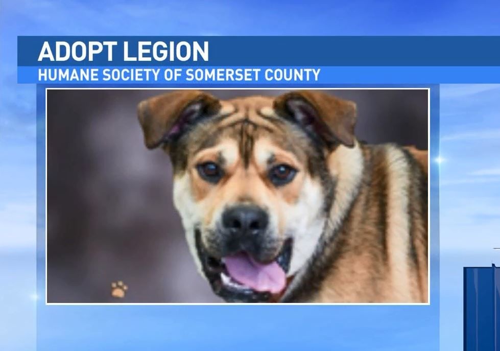 Legion is available at the Humane Society of Somerset County.